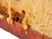 Honeycomb wax cell — Stock Photo