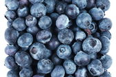 Blueberry fruit — Stock Photo
