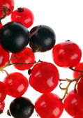 Currant berry — Stock Photo