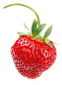 One strawberry — 图库照片
