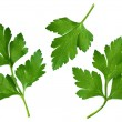 Parsley leaf — Stock Photo #22305811