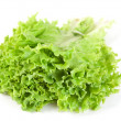 Lettuce leaf bunch — Stock Photo