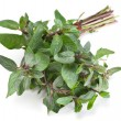 Mint herb — Stock Photo #22337755