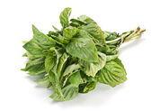 Basil leaf — Stock Photo