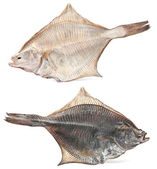 Salted flatfish — Stock Photo