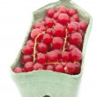 Stock Photo: Red currant berry