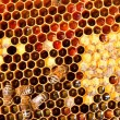Stock Photo: Honeycomb closeup