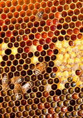 Honeycomb closeup — Foto Stock