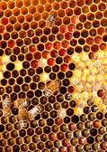 Honeycomb closeup — Stock Photo