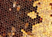 Bee and honeycomb — Stock Photo