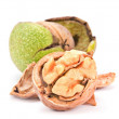 Walnut on white - Foto de Stock