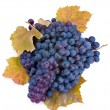 Wine grape - Foto de Stock
