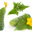 Cucumber set - Stock Photo