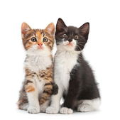 Two kitten sitting — Stock Photo