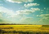 Willage field — Stock Photo