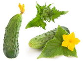Cucumber set — Stock Photo