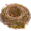 Bird-nest empty — Stock Photo