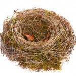 Bird-nest empty — Stock Photo
