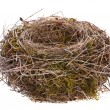 Bird nest isolated — Stock Photo