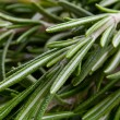 Stock Photo: Rosemary herb background