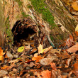 Hollow in autumn forest - Stock Photo