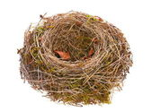 Bird-nest empty — Stockfoto