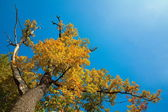 Oak tree in sky — Stock Photo