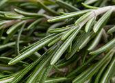 Fond herbe de romarin — Photo
