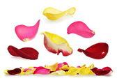 Rose petal set — Stock Photo