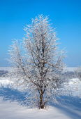 Tree in frozen ice — Stock Photo