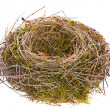 Empty bird nest — Stock Photo