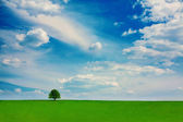 Summer landscape vibrant color — Stock Photo