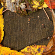 Stump in yellow leaves — Stock Photo