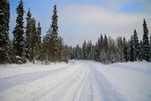 Floresta de inverno. — Fotografia Stock