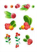 Cranberries — Stock Vector
