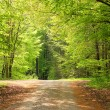 Crossway in a beech tree forest — Stock Photo