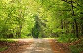 Crossway w lesie drzewa bukowe — Zdjęcie stockowe