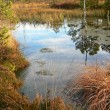 Pond in the moor — Stock Photo