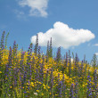 Flowery meadow of wildflowers against blue sky with cloud - Stock Photo