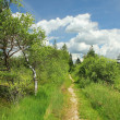 Footpath through bogland, nature protection area — Stock Photo