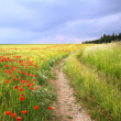 Country road through cornfield with red poppies — Stock Photo