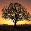 Lonely tree against sunset sky - Stock Photo