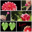 "Collage ""Love"" with flowers and teenage girls face — Stock Photo"