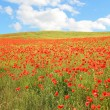 Red poppy hayfield and blue sky with clouds - Stock Photo