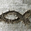 Ichthys fish scratched in a tree bark — Stock Photo