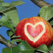 Red apple in an apple tree with heart symbol — Stok fotoğraf