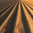 Furrows ready for sowing — Stock Photo