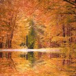 Stock Photo: Autumnal beech forest, water reflection in pond