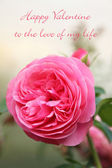 Happy valentines card with pink rose and text — Stock Photo