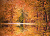 Autumnal beech forest, water reflection in the pond — Stock Photo